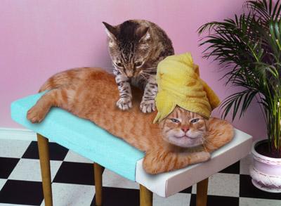 http://www.naute.com/funanimaux/massage.jpg