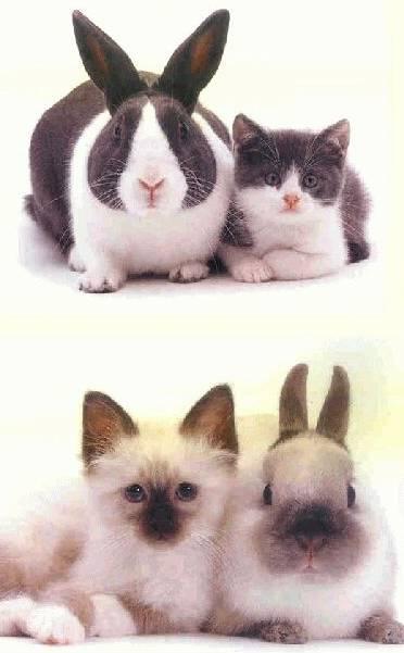 Ressemblance frappante !