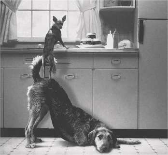 Entraide canine !