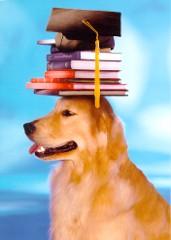 le petit denier Dogcardgraduation